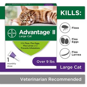 Bayer Best Flea Treatment For Cats