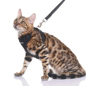 Escape Proof Cat Harness with Leash By Expawlorer