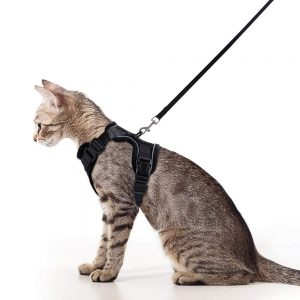 Escape Proof Harness and Leash Set By Rabbitgoo