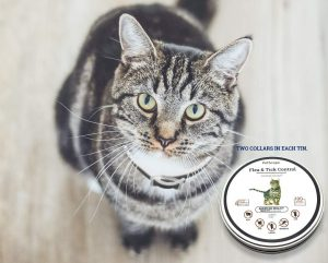 Organic Cat Flea Collar By Pet Scape
